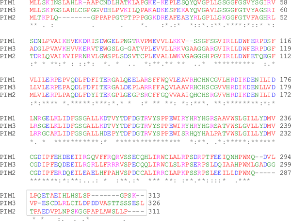 N-terminal part of the PIM2 protein