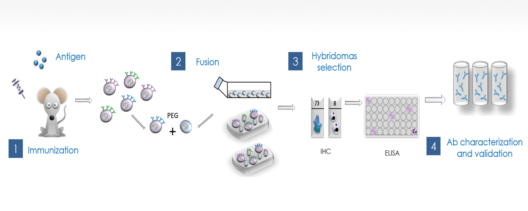 Monoclonal Antibody Production Process