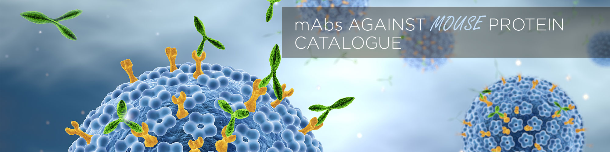 mAbs Against MOUSE Protein Catalogue